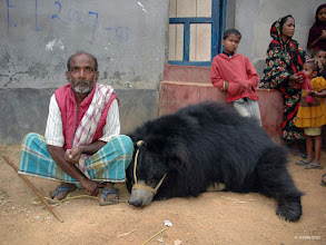 Photo: Owner and bear before he receives compensation and the bear is rescued
