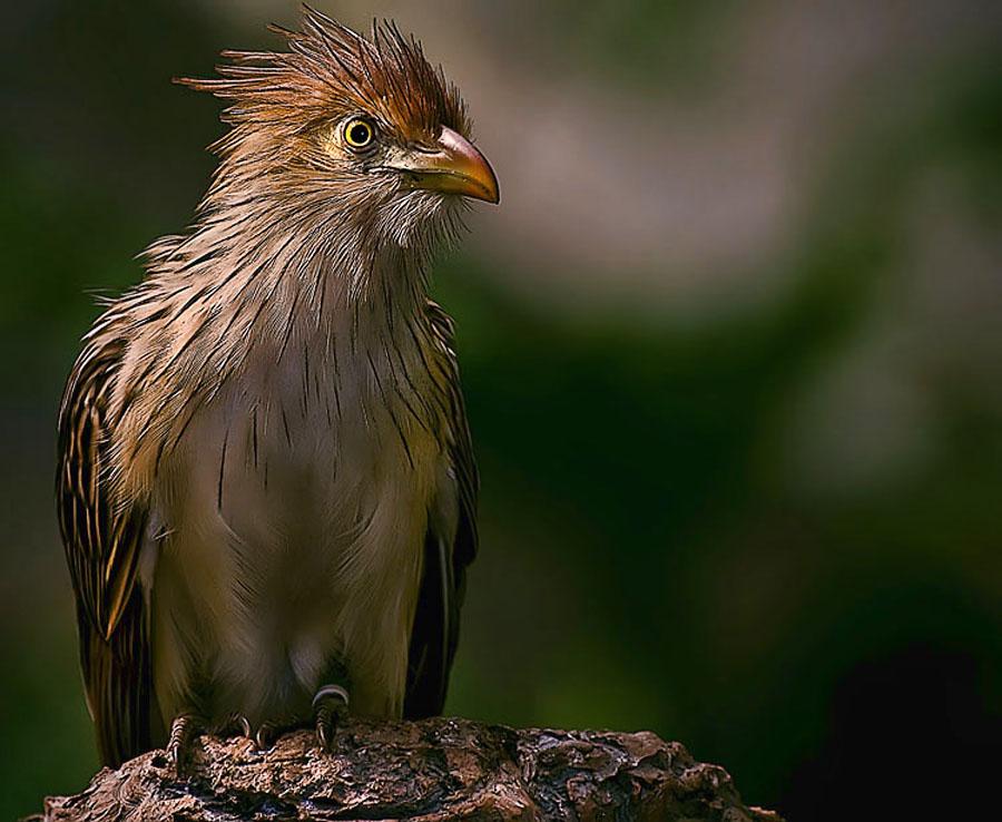 Wonderful by Cheri McEachin - Animals Birds