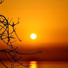 Sun sat over you by Daniela Elena - Landscapes Sunsets & Sunrises ( sunse, seaside, branches,  )