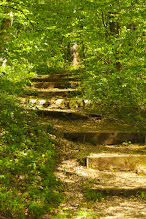 Photo: Follow the stairs up into the forest.