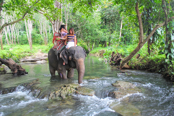 Walk along the river in Ao Nang on the back of an elephant