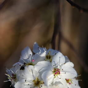 A Spring Bouquet  by Chandal Chenier - Flowers Flowers in the Wild ( texas, flowers, spring )