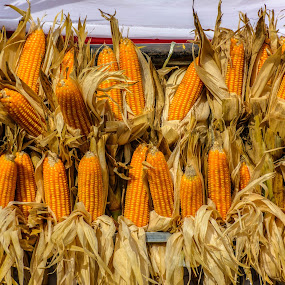 After harvest moon by Kriswanto Ginting's - Food & Drink Fruits & Vegetables ( photograph, photography by kriswanto ginting, nikon d7100, yellow, nikon, corn, photooftheday,  )