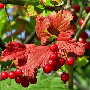 Early Autumn Arrivals.jpg