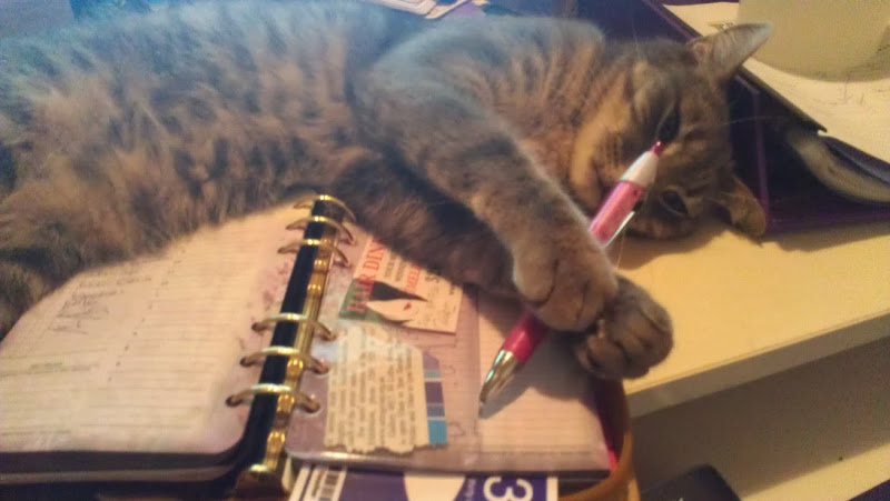 Photo: Pedro likes to help me with my diary