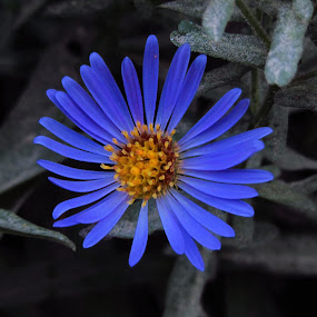 Beautiful and Lonely by Bharath Booshan - Nature Up Close Flowers - 2011-2013 ( selective color )