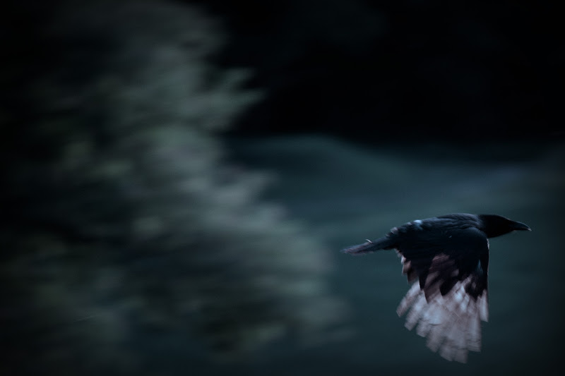 The Raven ... di versil