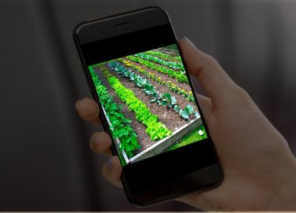 vegetable garden ideas - náhled