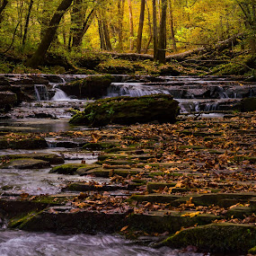 Bobo Creek in Late Day Sun by Thomas Jones - Landscapes Waterscapes ( waterscape, short springs, tennessee, tullahoma, landscape, bobo creek, infinity prime photography )