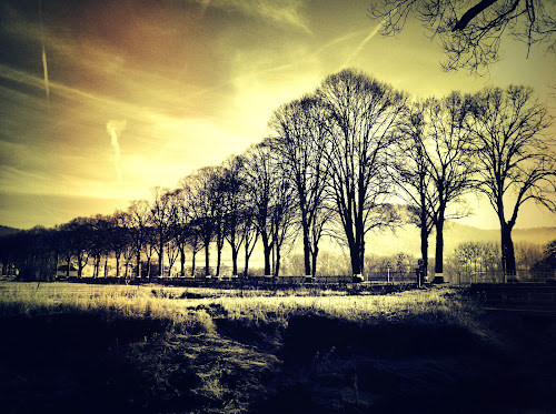 allee by Diana Calvario - Instagram & Mobile iPhone ( iphoneography, winter, nature, trees, iphoneographie )