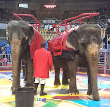 Photo: the elephants waiting for riders