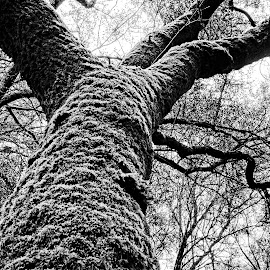 Spring Lake Moss by Barbara Brock - Nature Up Close Trees & Bushes ( black and white tree, large tree, tree with moss )