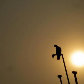 End of day by Mriganka Sekhar Halder - Animals Birds