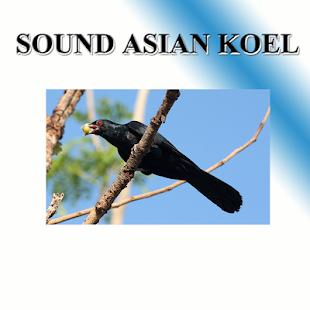 Cuckoo sounds to birds. - náhled