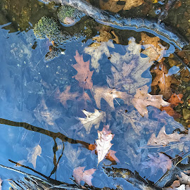 Leaves in the river by Patti Pappas - Nature Up Close Water ( water, michigan, reflection, leaves, river )