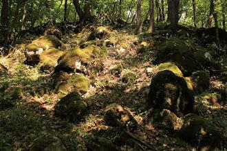 Photo: A Szád-vár erdős mészkőkúpjának Ny-i oldalában a Hallstatti Mészkő Formáció mohás rétegfejei bukkannak elő