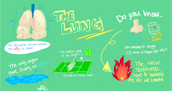 Fun facts about lungs poster