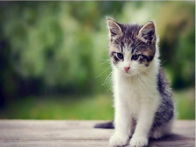 Từ giấc mơ về mèo, bạn có thể lựa chọn ra những con số may mắn