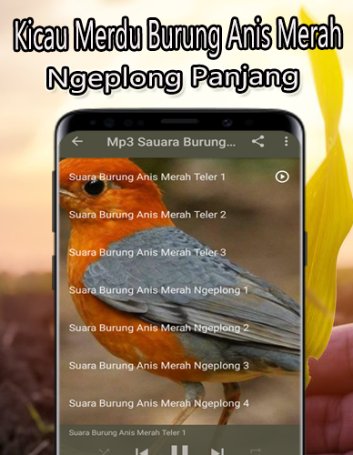Kicau Burung Anis Merah Juara Offline Download Apk Free For Android Apktume Com