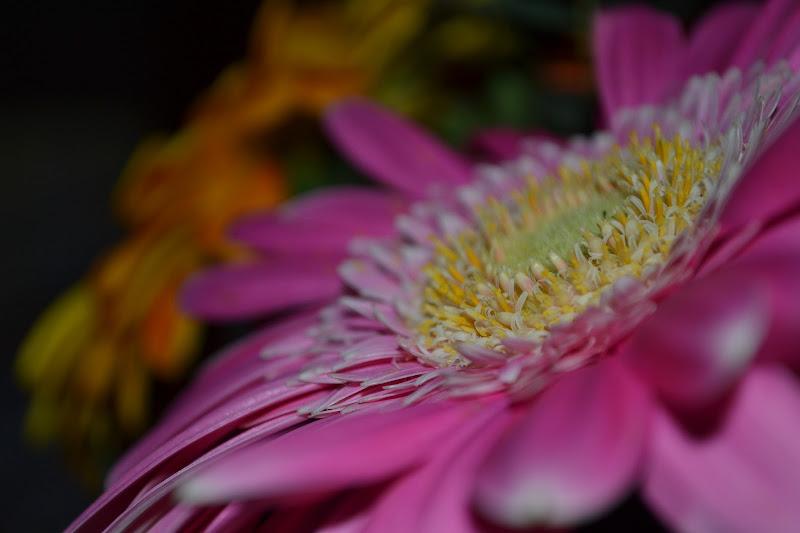 Flowers details  di Julia Arioli