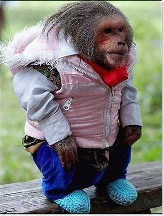 Monkey-cool_580_458971a