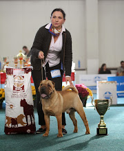 Photo: ŠV 2013 - CAC, BOS Matgo Magic Aussie