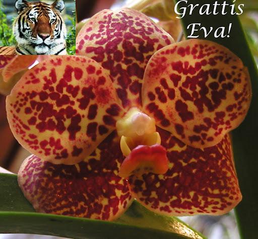 grattis eva GRATTIS Eva!! i OrkidéPrat grattis eva