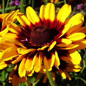 Good Morning by Alison Gimpel - Flowers Single Flower ( minnesota, nature, lake superior, flowers, yellow flower,  )