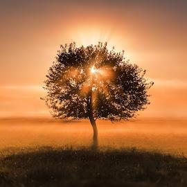 Eye of the tree by Alex Jitaru - Landscapes Sunsets & Sunrises