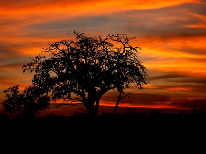 Tramonto Africano di Charmer