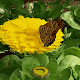 Brown Butterfly Live Wallpaper (app)