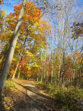 Photo: Beautiful fall forest and path at Hills and Dales Metropark in Dayton, Ohio.