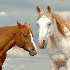 cavalos 032.jpg