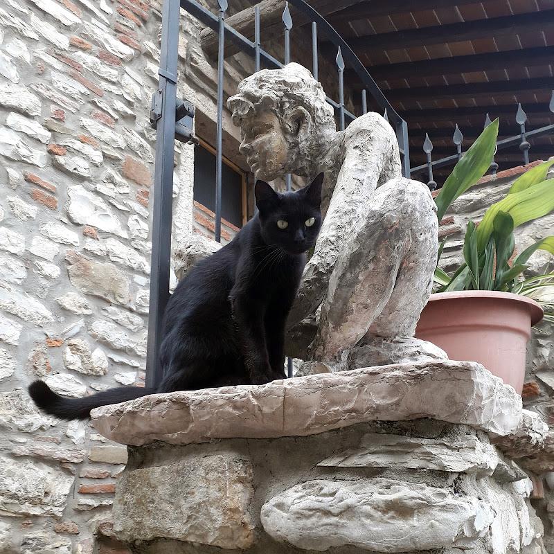 Gatto nero di IBPhotos