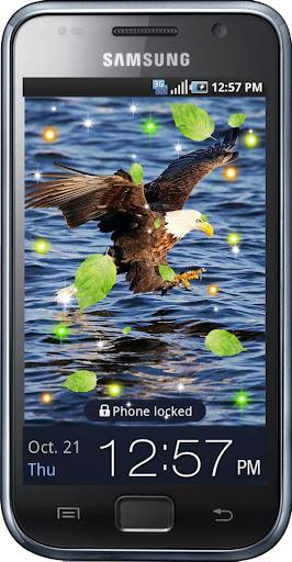 Eagles Birds live wallpaper