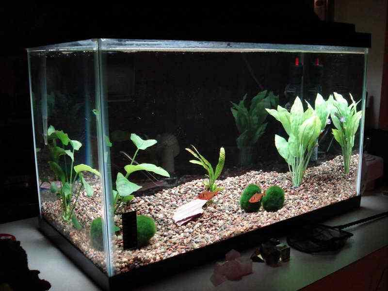 Aquarium decoration ideas android apps on google play for Tall fish tank decorations