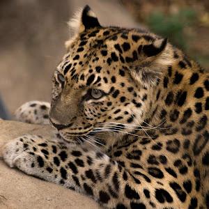 St.Louis Zoo 10-06-2013-00740.JPG