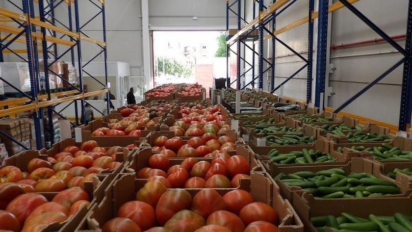 Tomates y pepinos para exportar.