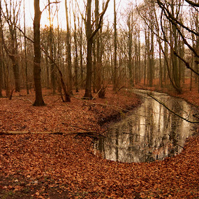 Amsterdamse Bos by Amanda Dacey - Landscapes Forests ( wood, amsterdamse bos, trees, amsterdam, forest )