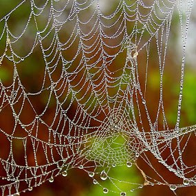Colorful spider web by Shrikrishna Bhat - Nature Up Close Webs ( water, nature, web, spider, mesh,  )