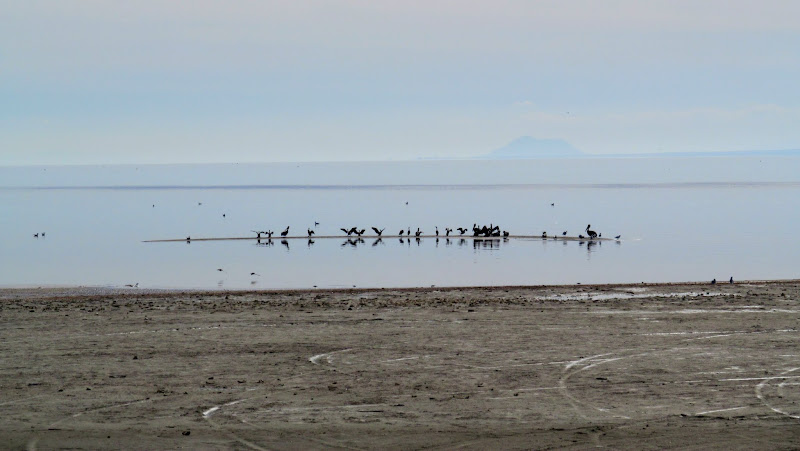 Photo: Birds on the Salton Sea