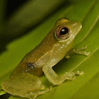 Charming Tree Frog