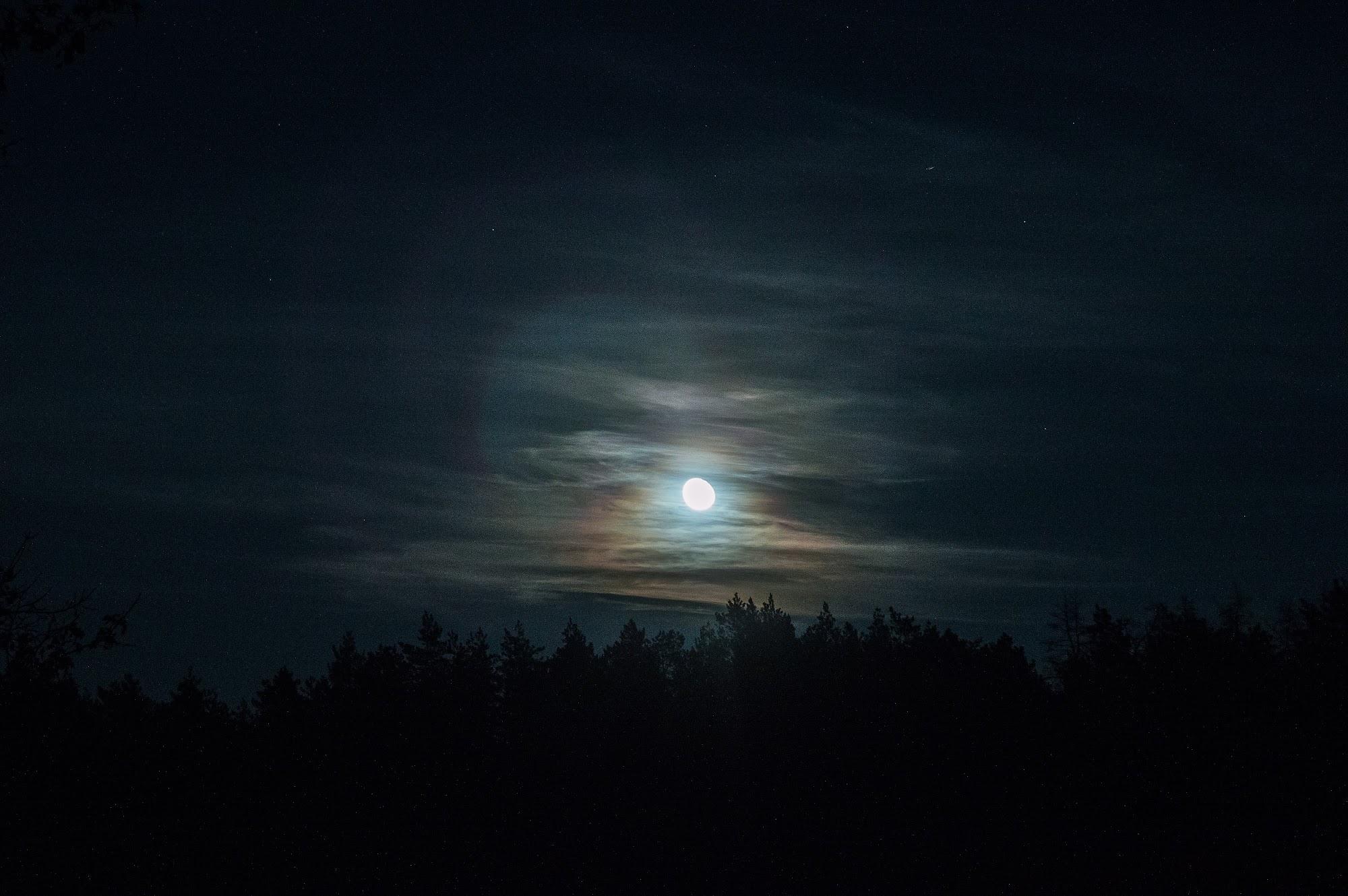 Місяць над лісом