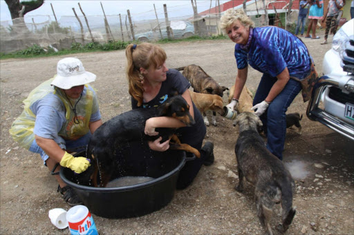 GOOD WORK: Volunteers Leigh-Ann Kretzman, left, and Calin Rusch with Marlene Neumannn at Nokhala village in Kwelerha during their Buckaroo project, helping dogs that are in need of any kind of assistance. Neumann is appealing for donations PICTURE: MICHAEL PINYANA
