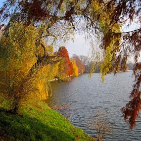 november by Mihai Nita - City,  Street & Park  City Parks ( autumn light, park, grass, trees, autumn colors,  )