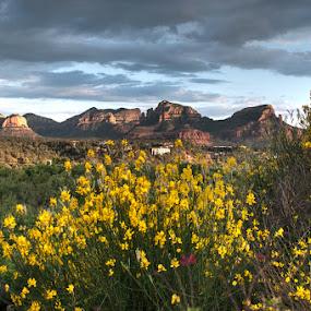 Arizona Flowers by Bob Barrett - Landscapes Mountains & Hills ( hdr, arizona, landscape, flowers, sedona )