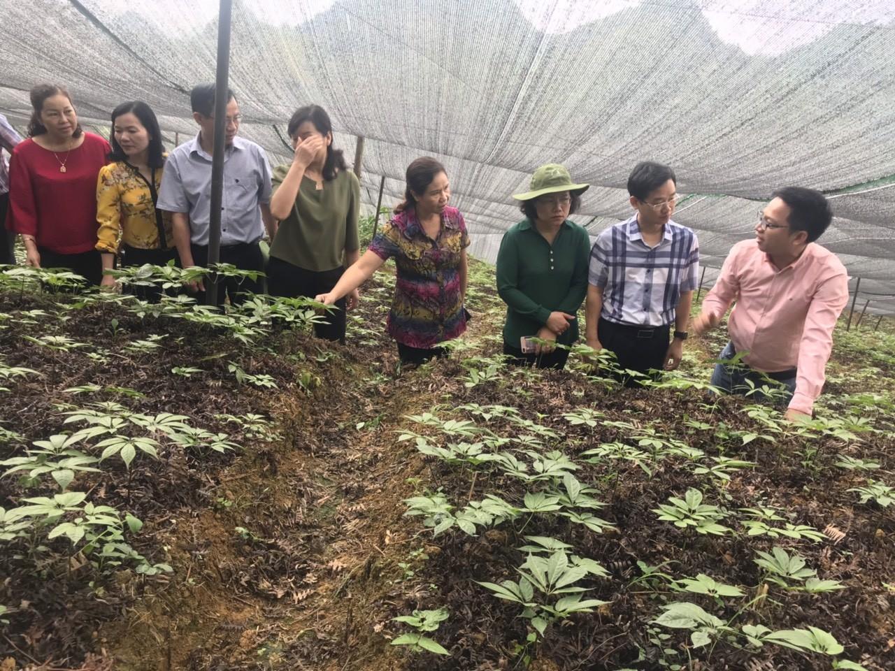 Phân hiệu Đại học Thái Nguyên tại tỉnh Lào Cai phối hợp đưa Đoàn giám sát chuyên đề của Hội đồng Nhân dân tỉnh thăm mô hình của các Đề tài nghiên cứu khoa học công nghệ cấp tỉnh trên địa bàn tỉnh Lào Cai