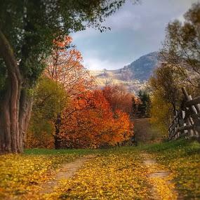 like fall by Lili Screciu - Landscapes Mountains & Hills (  )