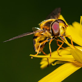 by David Bevan - Animals Insects & Spiders