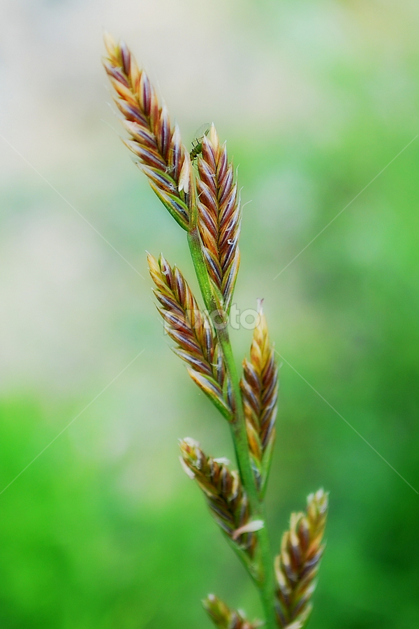 Grass by Dasha Herman - Nature Up Close Leaves & Grasses